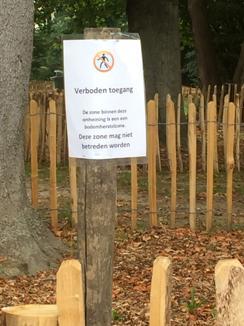 castanea afsluiting park van Relst_klein